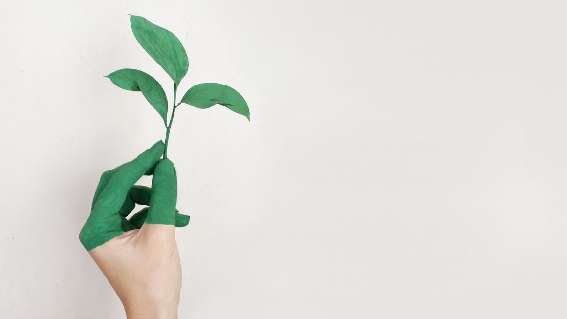 Easy Ways to Be Eco-friendlier Every Day